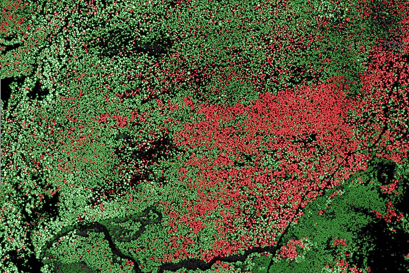 LiDAR + ForestView™ tree mortality