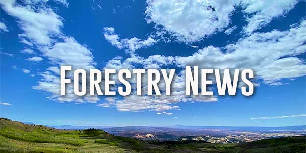 Northwest Management forestry news